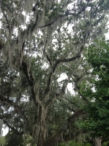 Park Trees, New Orleans