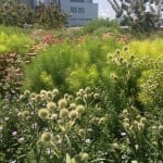 "High Line Park, Manhattan: Walking the ""rails"" above Chelsea in NYC."