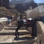 Donkeys are a Thing–Oia, Santorini, Greece